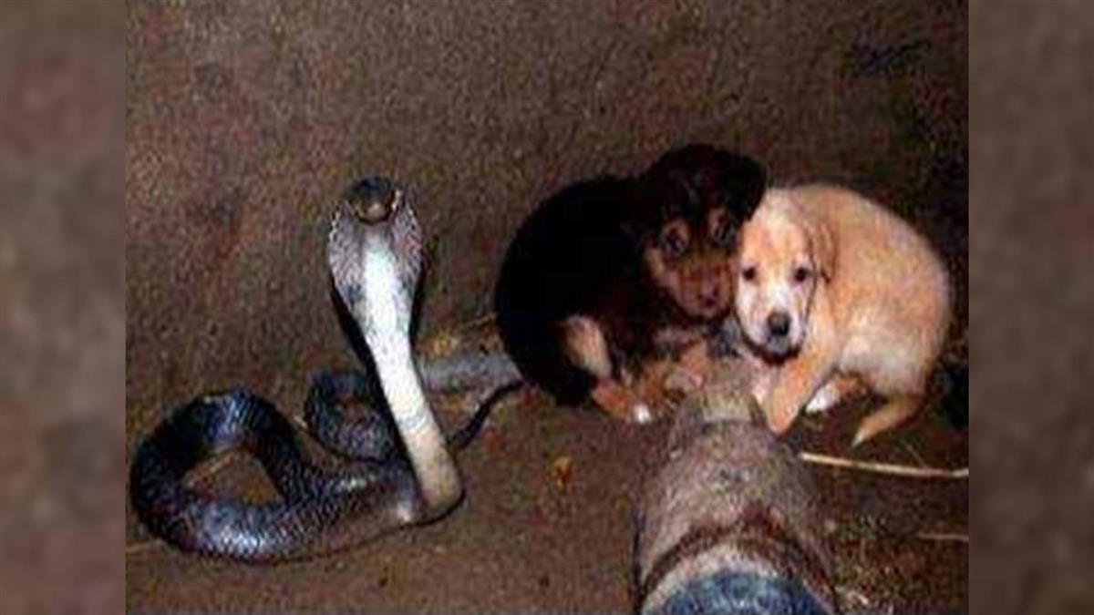 2小狗掉入井裡「眼鏡王蛇」狠瞪!48小時後結局超展開