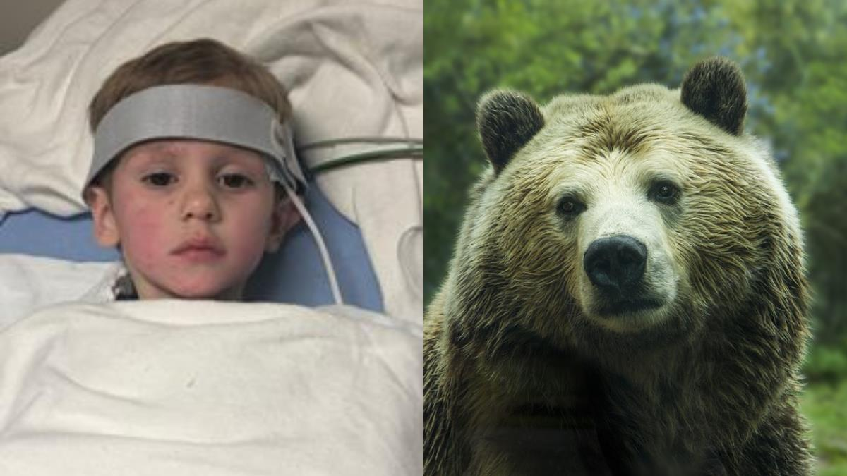 3歲童0℃雨躲木叢!55小時驚奇生還:有一隻熊陪我玩