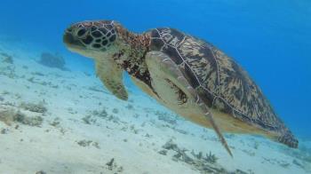 沖繩離島這樣玩:尋找慶良間藍!一生必去潛水朝聖