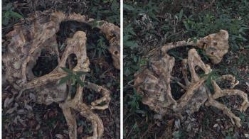 外星人木乃伊?日本驚見240公分乾屍…蜷曲脊椎超詭異