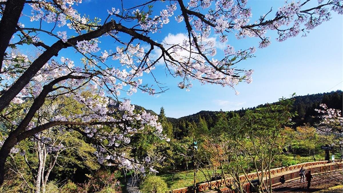 春節連假有福了!阿里山景點將提供免費接駁