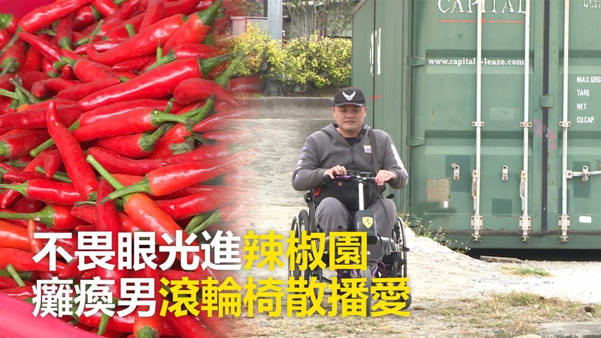不畏眼光進辣椒園 癱瘓男滾輪椅散播愛