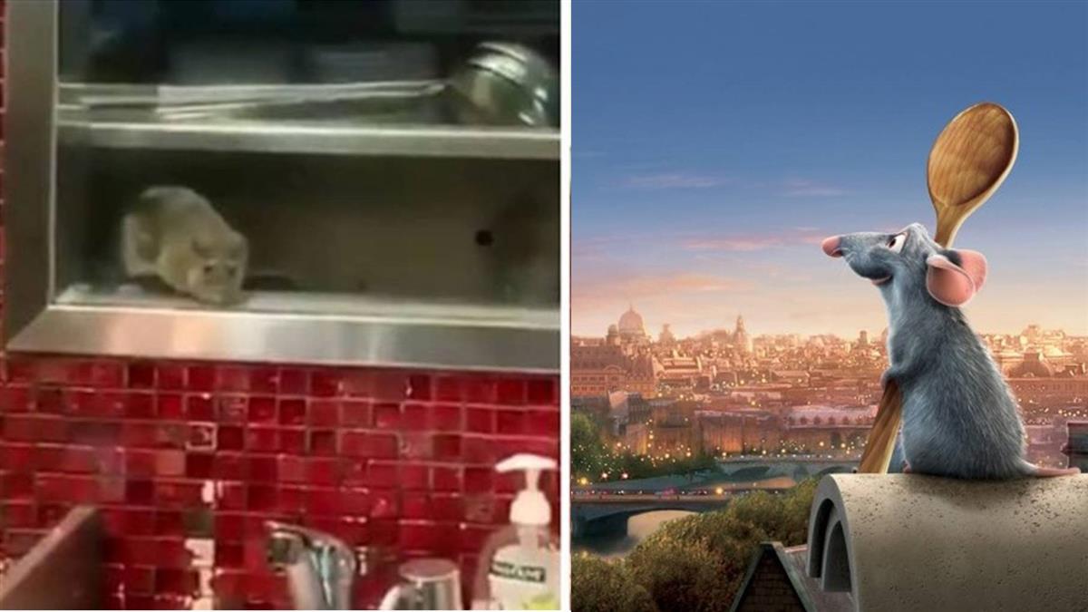 雪梨鼎泰豐驚見真實版「料理鼠王」顧客:我要吐了