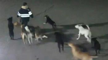 絕命圍攻!女步行上夜班 慘被11隻流浪狗撕咬身亡