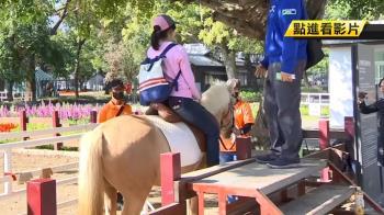 花博后里馬場傳意外!馬受驚嚇…將女遊客重摔在地