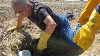搶救毛小孩!徒手開挖1小時 鑿洞鑽地救5受困幼犬