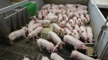 農委會:582場廚餘養豬須徹查  否則防疫漏洞開