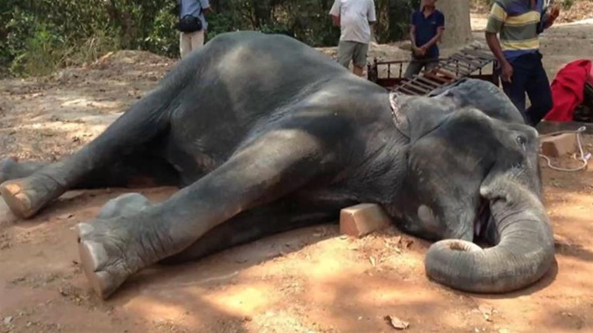 泰大象再傳傷人! 女學生遭象鼻捲甩 2分鐘後驚險脫困