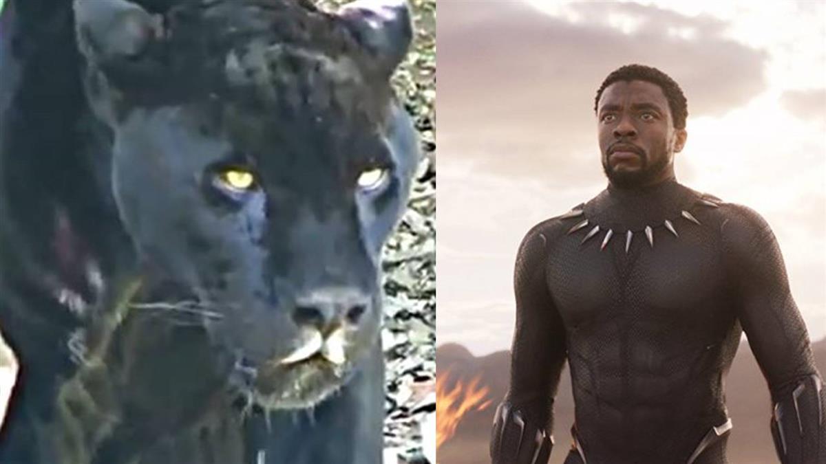 漫威「瓦干達」是真的!神秘黑豹隔百年肯亞現蹤