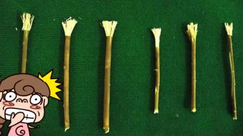 古代人不刷牙?千年「9味牙膏」神厲害