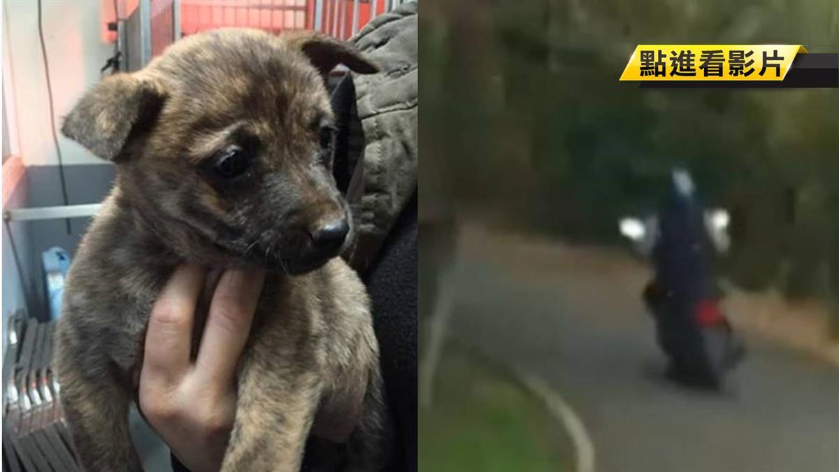 他丟狗了! 3幼犬害怕直發抖 志工山區追車遭飼主擦撞