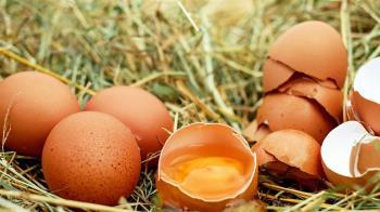 蛋荒有解! 農委會:最快3月中生鮮雞蛋將穩定供應