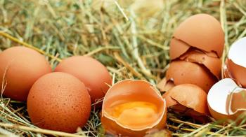 保護力提高3至4倍!研究:雞蛋作流感疫苗可抗病毒