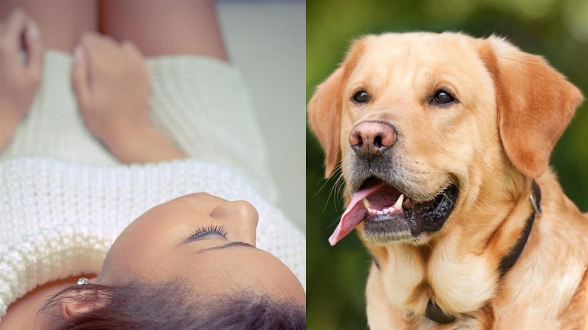 年輕媽媽下體痛到漏尿!醫嚇傻:腫如西瓜…遛狗惹禍