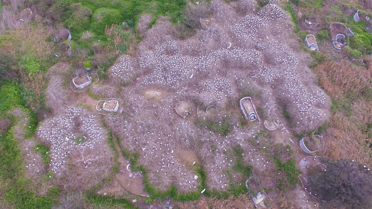 頭皮發麻!六福村引進6隻「巫婆鳥」…30年爆量恐破萬
