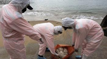 馬祖澳口驚見棄置死亡紅頭鴨  緊急消毒銷毀