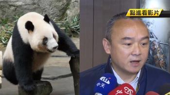 貓熊外交!大陸有意贈貓熊給高雄 觀光局證實