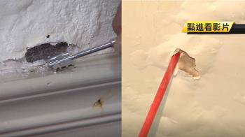 壁紙受潮就要換 發霉逸散塑化劑達9倍!