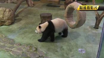 【獨家】動物園大明星 團團圓圓進駐帶動周邊商機!