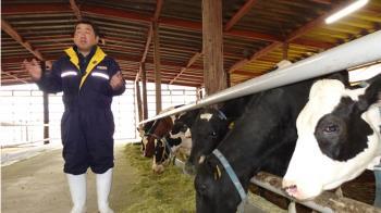福島酪農談311 要把消失130頭乳牛養回來