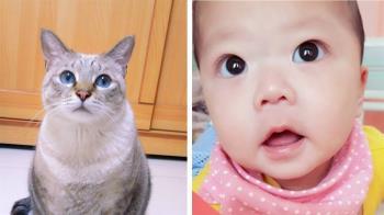 貓咪臨終前相約再見…她生三寶後噴淚:回來了