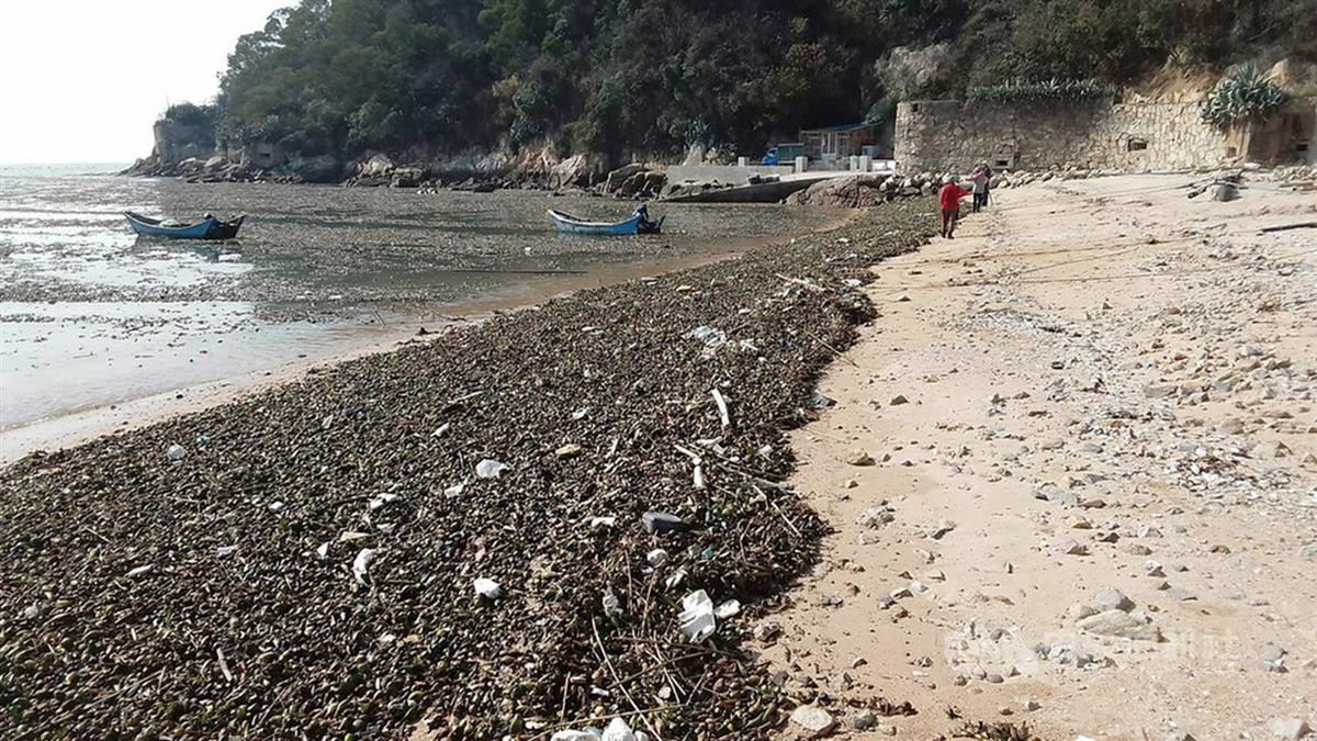 中國大陸閩江山洪爆發  海漂垃圾滿佈馬祖澳口