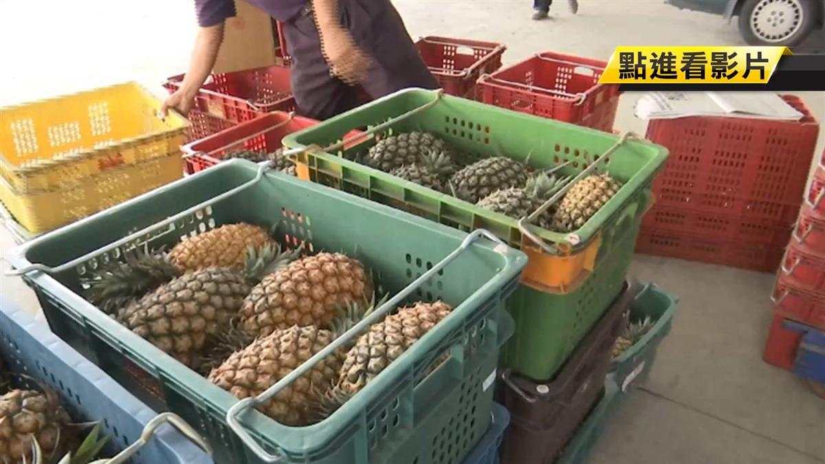 暖冬造成產季提前 嘉義鳳梨價格直直落