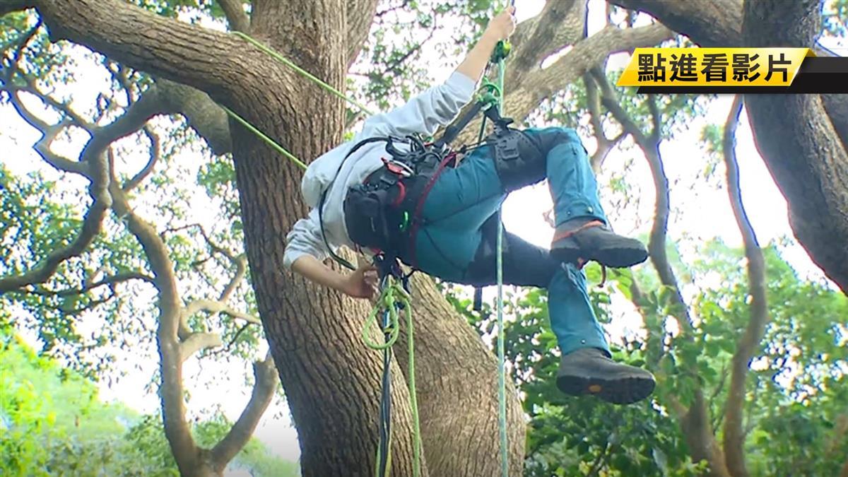 【獨家】攀樹師全台僅10人 文化大學森保系教你爬樹