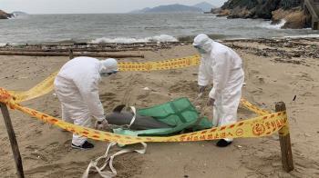 馬祖又見死亡海豚  今年第二隻