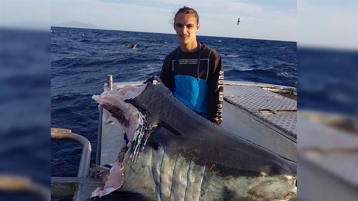 時速74km逃不掉!釣客驚見百公斤巨鯊被啃剩頭