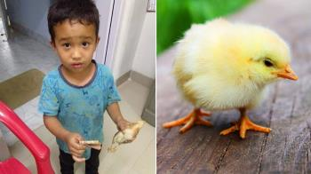 6歲童拿家當救小雞 不知死了…哭著繼續籌錢