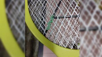 電蚊拍驚見14顆蟲卵!網笑:求直播死刑