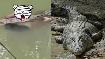 悚!鱷魚嗑午餐 漂河面叼一隻人腿