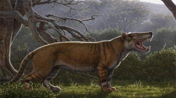 肯亞驚現史前巨獅 重1.5噸身形如大象!巨齒曝光