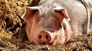 「科學怪豬」死而復生?注人造血…腦重生10hr