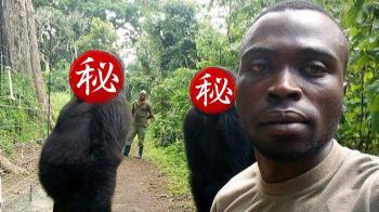 大猩猩自然擺拍!保護員快門一按…激似偶像團體