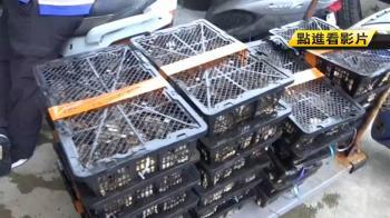 174kg大陸活鮑魚遭查扣 業者分批運送被逮