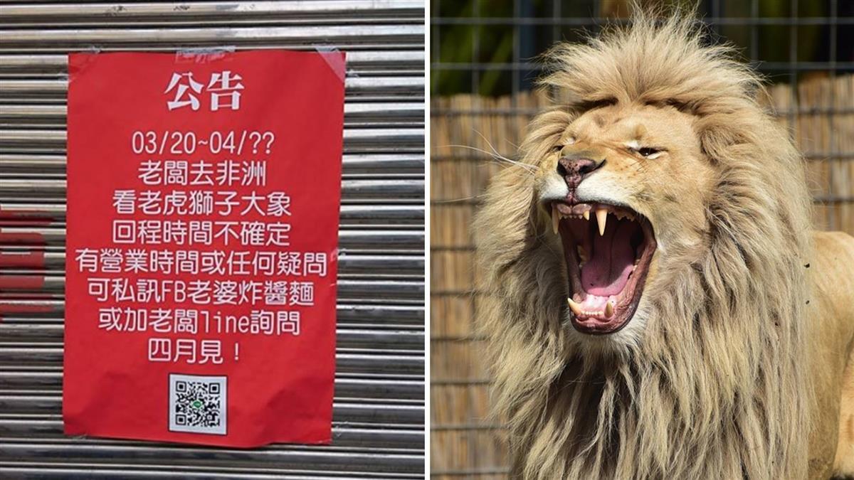 老闆去非洲看獅子!在地人驚曝2年真相