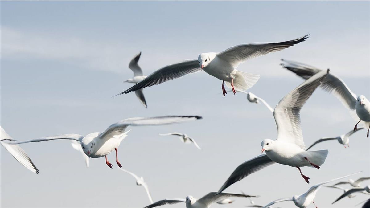 每年500萬隻鳥「撞雲慘死」?原因超驚人