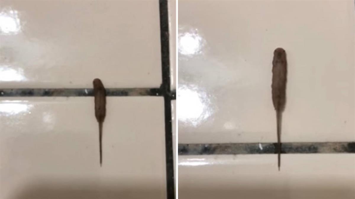 [新聞] 10cm詭異黑香腸狂蠕動!網驚:30年沒看過