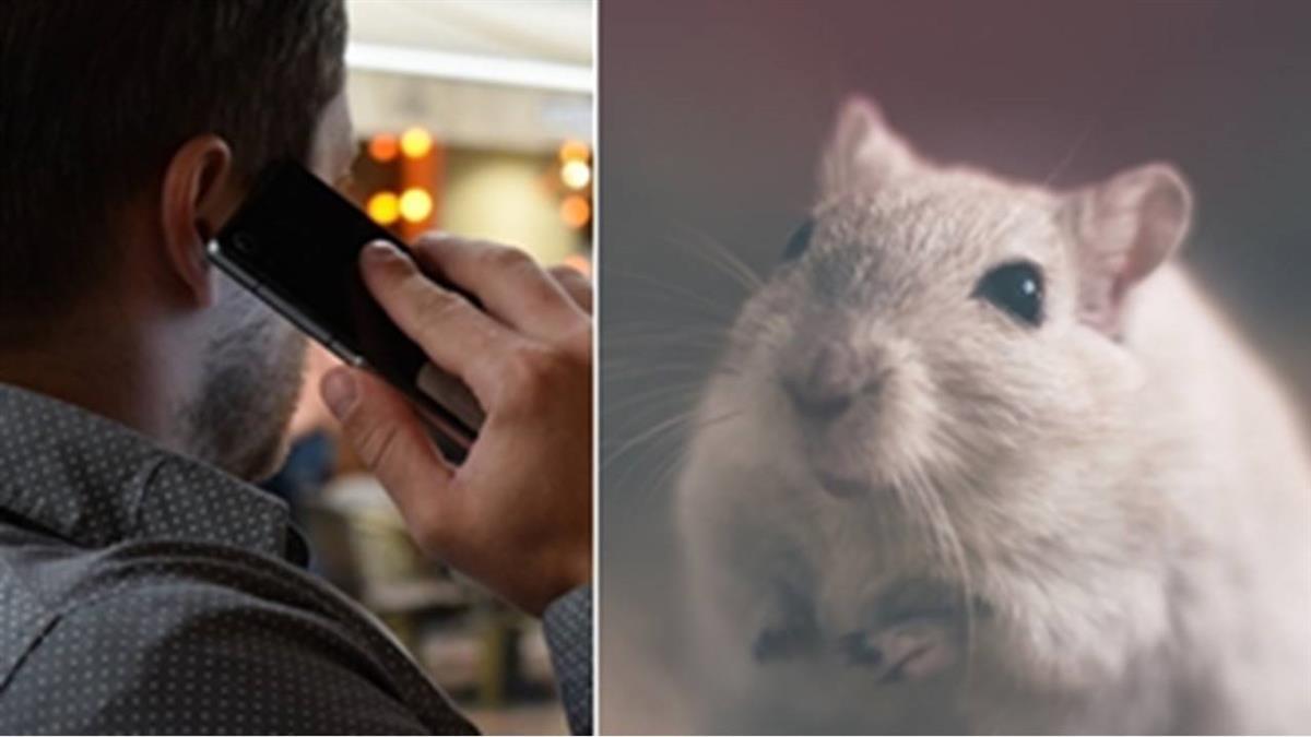 出國飯店有老鼠!他急中生智 網讚:超有梗