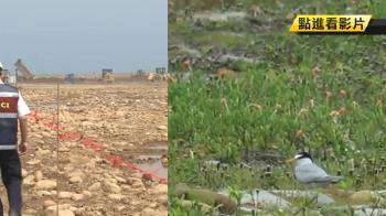 觀塘案嚴重破壞生態 中油承諾劃人工棲地