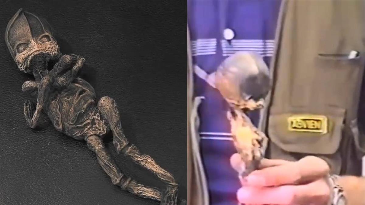 墓地撿到外星人!科學家揭23年驚人真相