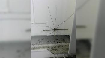 窗外驚見巨無霸蚊子…他嚇傻 網勸:千萬別殺