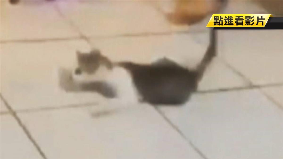 抓小貓狂甩拍影片 桃園2高中生涉虐貓