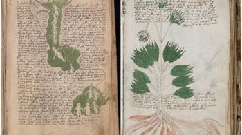 破解500年前「伏尼契手稿」!揭占星性愛真相