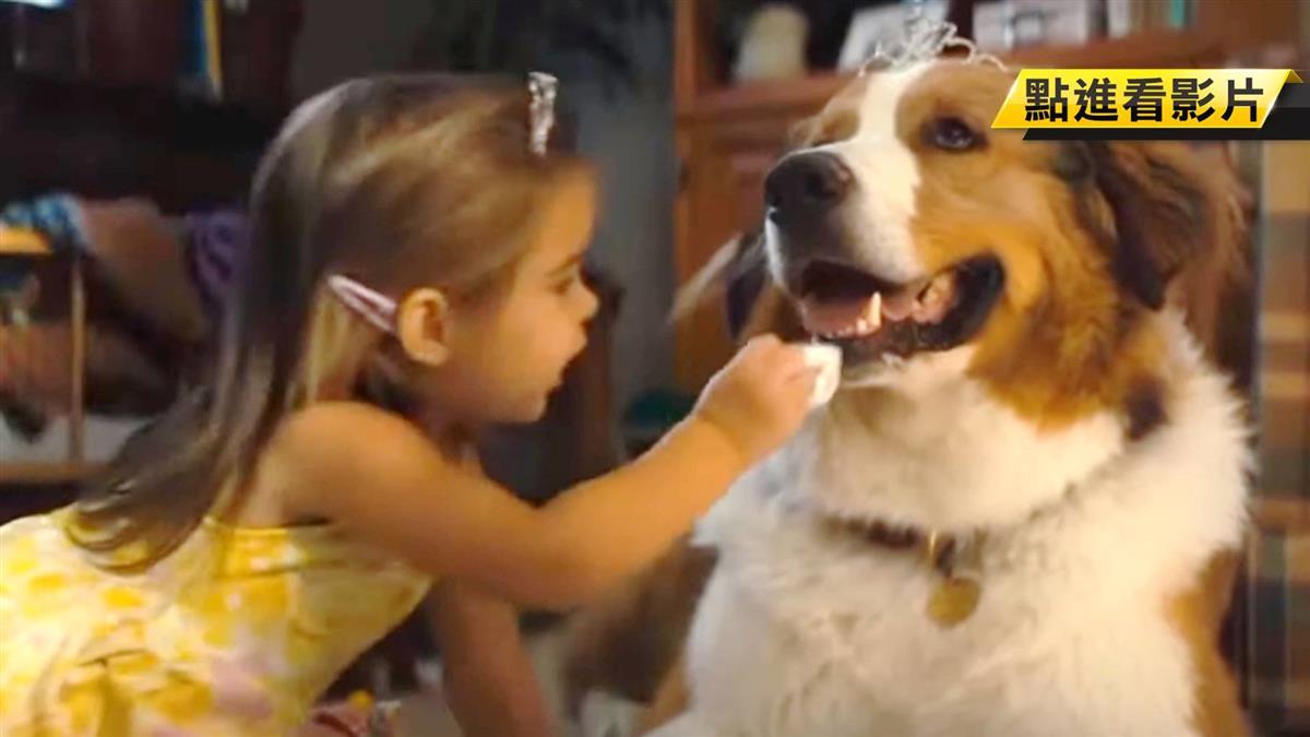 本周電影多樣選擇!狗狗、醜娃娃歡笑又溫馨