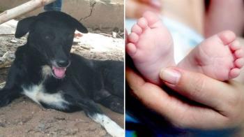 愛犬衝田裡狂吠…他驚見土裡露出嬰兒腿