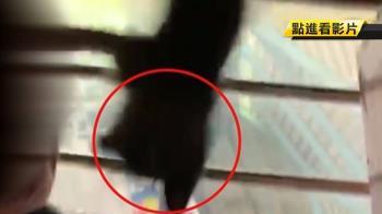 遊樂器材掉出三隻貓!撞頭抓手 空中嚇壞怒求償