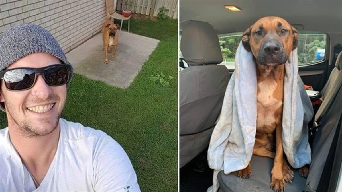 主人車禍亡 重傷忠犬伴屍5hrs…被安樂死